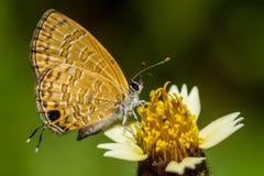 Motyla i koloru żółtego kwiaty Fotografia Stock