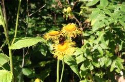 Motyla i lasu kwiaty Obrazy Stock