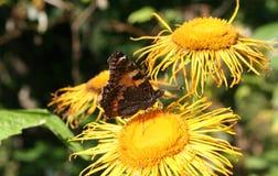 Motyla i lasu kwiaty Fotografia Royalty Free