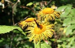 Motyla i lasu kwiaty Zdjęcie Stock