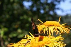 Motyla i lasu kwiaty Obraz Royalty Free