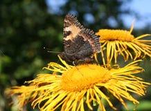 Motyla i lasu kwiaty Zdjęcia Royalty Free