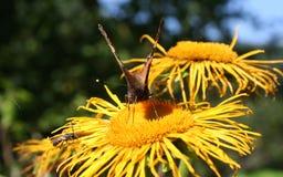 Motyla i lasu kwiaty Zdjęcia Stock