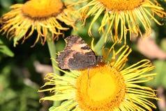 Motyla i lasu kwiaty Zdjęcie Royalty Free