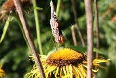 Motyla i lasu kwiaty Obrazy Royalty Free