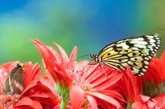 motyla ogród Obrazy Royalty Free