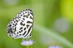 motyla ogródu zieleni natury biel Zdjęcia Stock