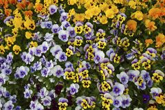 motyla opadowy kwiecisty kwiatów serca wzoru kolor żółty Zdjęcie Stock