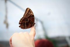 motyla palec Obrazy Royalty Free
