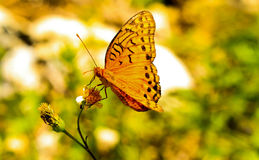 Motyla park Obrazy Stock