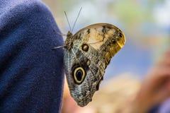 Motyla park w Valencia mus wizyta Zdjęcie Royalty Free
