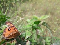 motyla pobyt w liściu obraz stock
