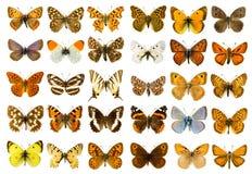 Motyla set Zdjęcia Royalty Free