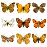 Motyla set Fotografia Royalty Free