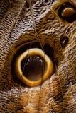 motyla skrzydło Obrazy Royalty Free