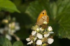 Motyla skrzydła oka zmrok zdjęcia royalty free