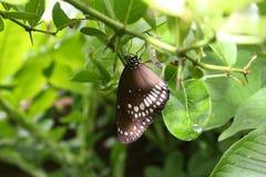 Motyla tła zielony butterflywallpaper świeży naturalnie dorośleć zdjęcia stock