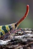 motyla unikalny zielony Fotografia Royalty Free