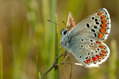 motyla w kąpieliskach słońce Zdjęcie Royalty Free
