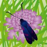 motyla wektor Obrazy Stock