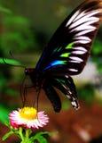 Motyla zamknięty up Zdjęcia Royalty Free