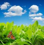 motyla zieleni liść Zdjęcie Royalty Free