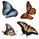 motyle obrazy royalty free