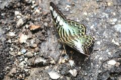 motyle Obraz Royalty Free