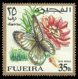 Motyle, afrykanin Chmurnieli kolor żółtego Obraz Royalty Free