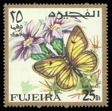 Motyle, afrykanin Chmurnieli kolor żółtego Zdjęcia Stock