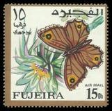 Motyle, Arabski Ścienny Brown Zdjęcie Stock