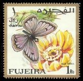 Motyle, Arabski Gigantyczny amorek Obraz Royalty Free