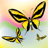 motyle egzotyczni Zdjęcie Royalty Free