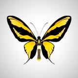 motyle egzotyczni Obraz Royalty Free