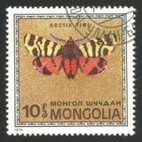 Motyle, Hebe Tygrysi ćma Zdjęcia Stock