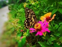Motyle i flowers zdjęcie stock