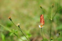 motyle i kwiaty Obrazy Stock