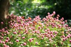 Motyle i kwiaty Zdjęcie Royalty Free