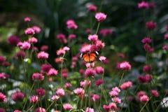 Motyle i kwiaty Fotografia Stock