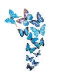 Motyle izolują majcherów Obrazy Royalty Free