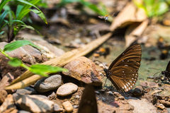 Motyle je sól Fotografia Stock