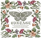 Motyle. Kartka z pozdrowieniami. Piękna rama. Fotografia Royalty Free