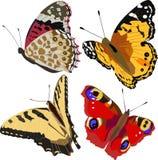 motyle kolorowi Zdjęcie Royalty Free