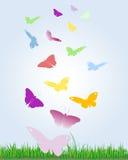motyle kolorowi Fotografia Royalty Free