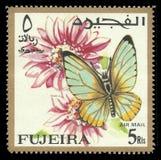 Motyle, Kropkujący Rabatowy motyl Fotografia Stock