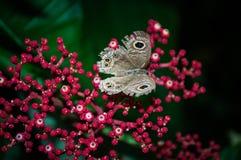 Motyle latają daleko od Obraz Royalty Free