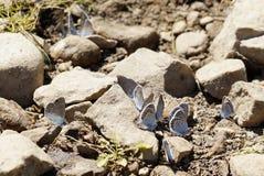 motyle Lato Naturalny pi?kno Rosja fotografia royalty free