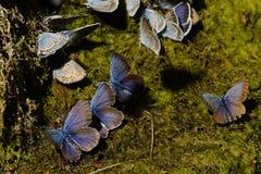 motyle Lato Naturalny pi?kno Rosja obrazy royalty free