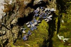 motyle Lato Naturalny pi?kno Rosja zdjęcia stock