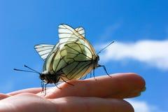 motyle matuje na ręce Zdjęcia Royalty Free